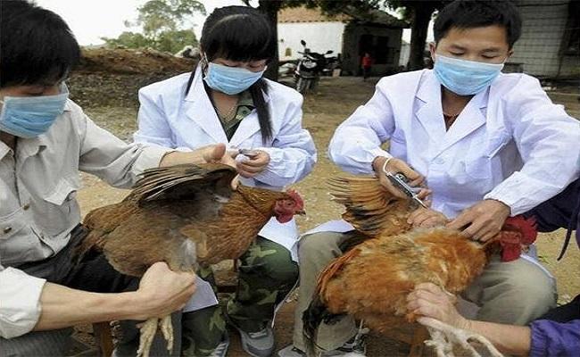 سلالات قاتلة من إنفلونزا الطيور تتفشى بأوروبا
