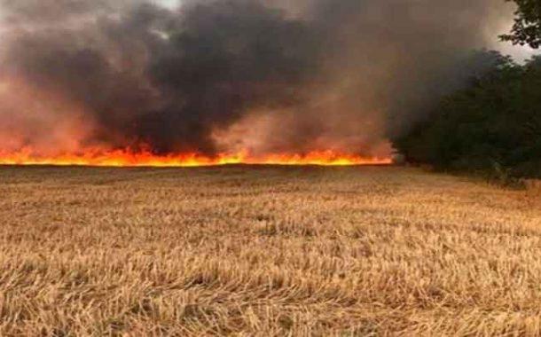 الحماية المدنية تخمد حريق محصول القمح في الهاشمية بالبويرة
