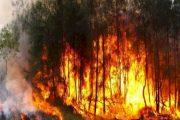 كلما اشتد الخناق على الجنرالات يحرقون الغابات