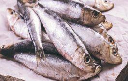 بعيداً عن الأسماك...اطعمة نباتية توفر لكم كمية كبيرة من اوميغا 3!