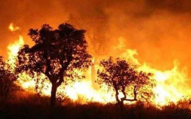 أغلب حرائق الغابات تقف ورائها